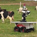 Nhật bản đầu tư công nghệ vào lĩnh vực nuôi bò sữa như thế nào?