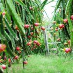 EU thúc đẩy đầu tư vào ngành thực phẩm Việt Nam