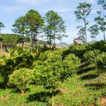 """Chủ nhân khu du lịch Đasar: 10 năm bỏ phố đi giữ """"trái tim"""" rừng"""