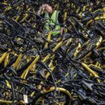 """""""Cơn sốt"""" chia sẻ xe đạp ở Trung Quốc hạ nhiệt nhanh chóng"""