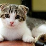 Microsoft đã kiểm chứng: Nhân viên bị giảm năng suất làm việc bởi những đoạn video về mèo